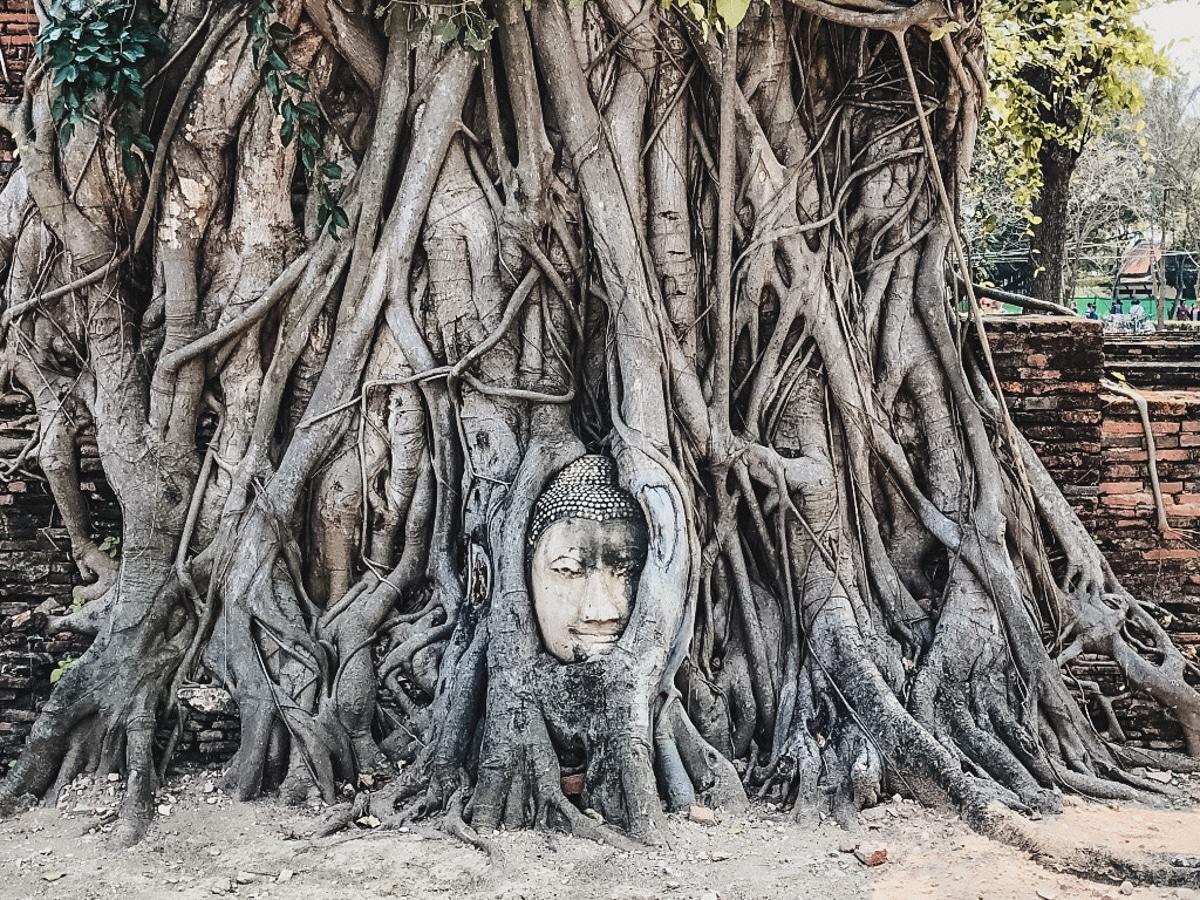 bouddha arbre ayutthaya