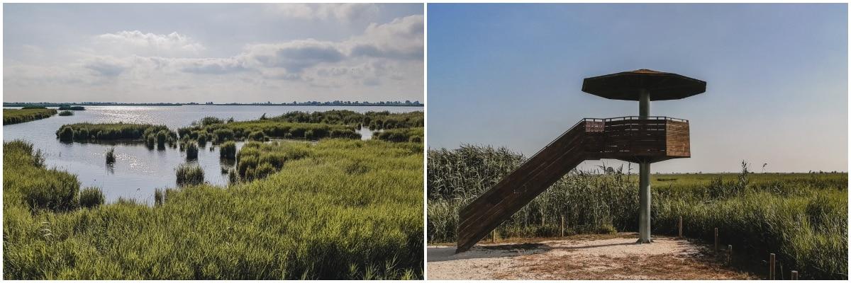 lagune oiseaux catalogne