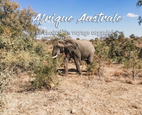 éléphant nature afrique voyage