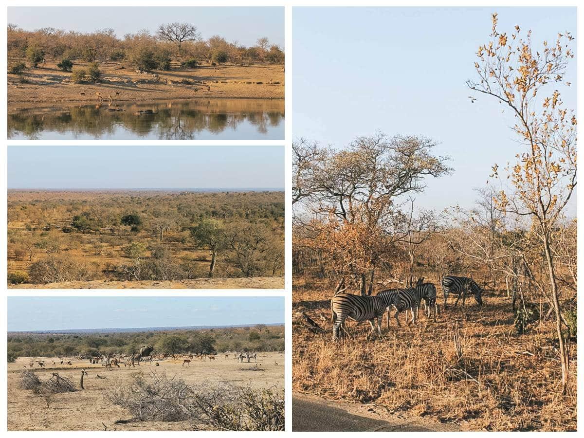 animaux safari afrique