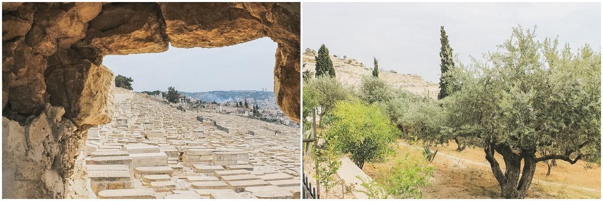 oliviers cimetière jérusalem