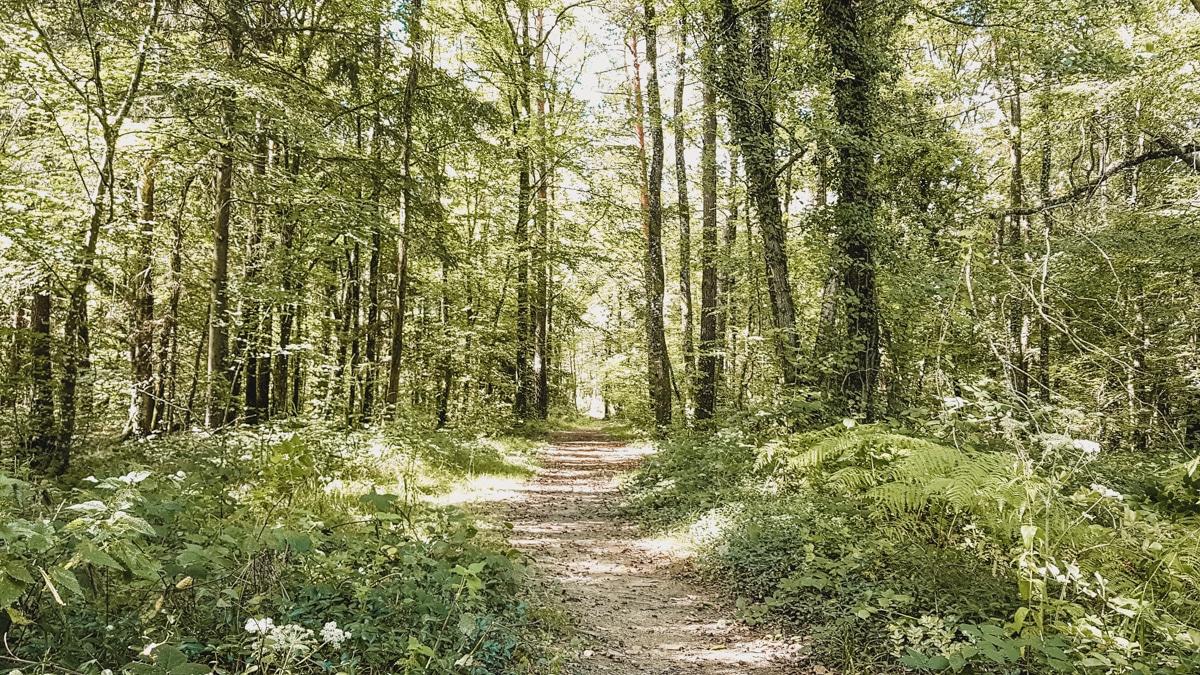 forêt chemin rennes