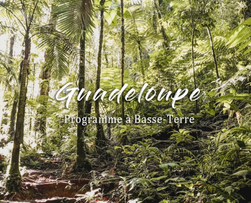 forêts arbres basse terre guadeloupe