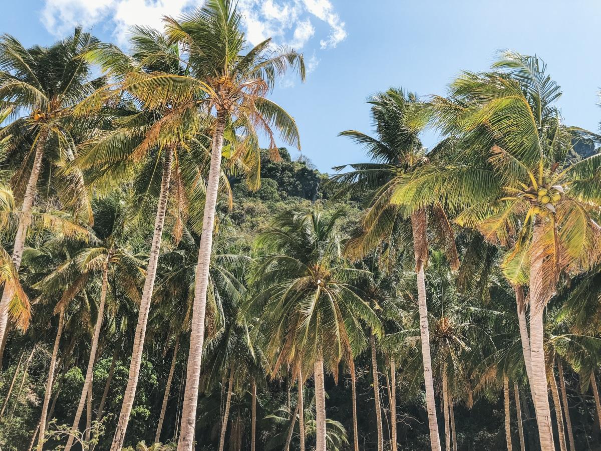 palmier plage philippines el nido