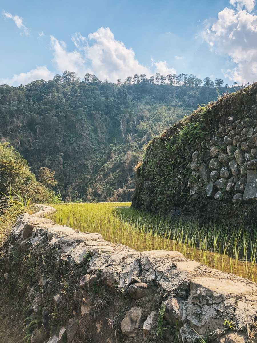 rizières philippines paysage
