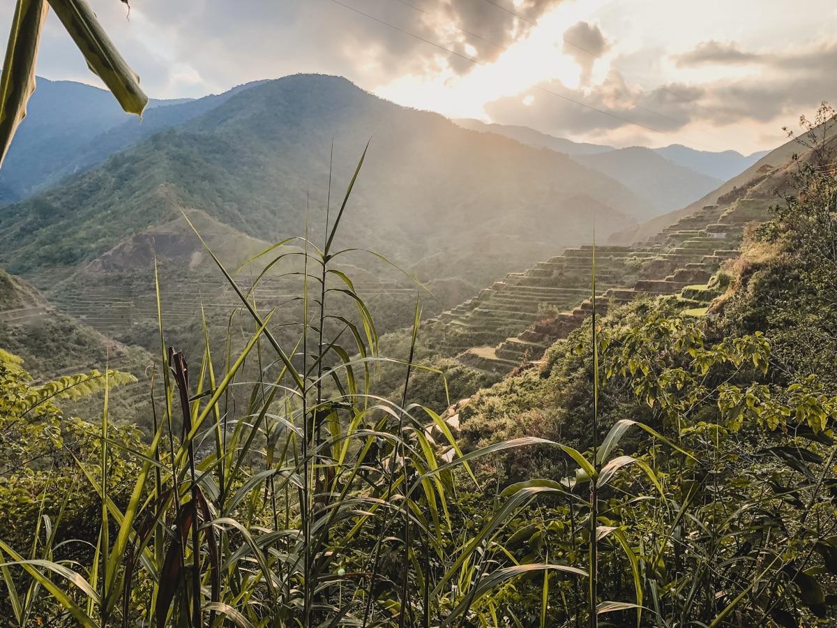 rizières nature philippines luçon