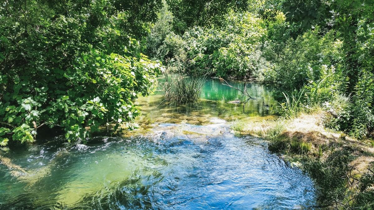 rivière bassin arbre krka croatie