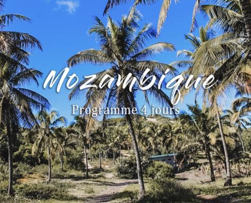 palmiers mozambique