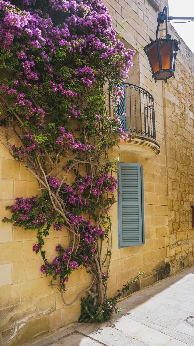 maison fleurs malte incontournables