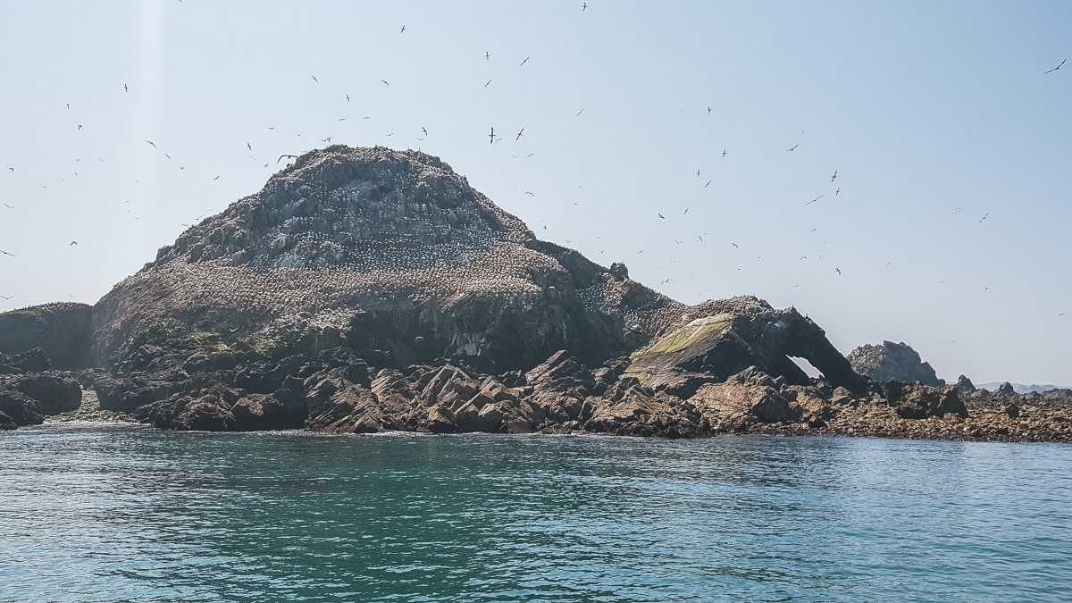 île oiseaux mer granit rose