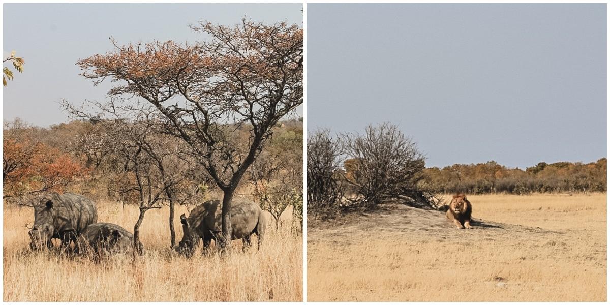 rhinocéros matopo zimbabwe incontournables hwange