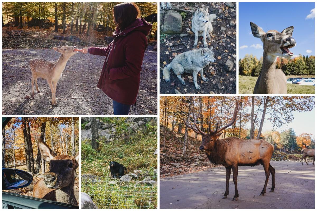 animaux parc quebec
