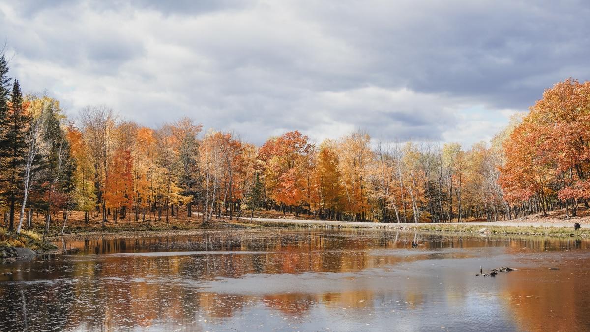 lac arbres quebec