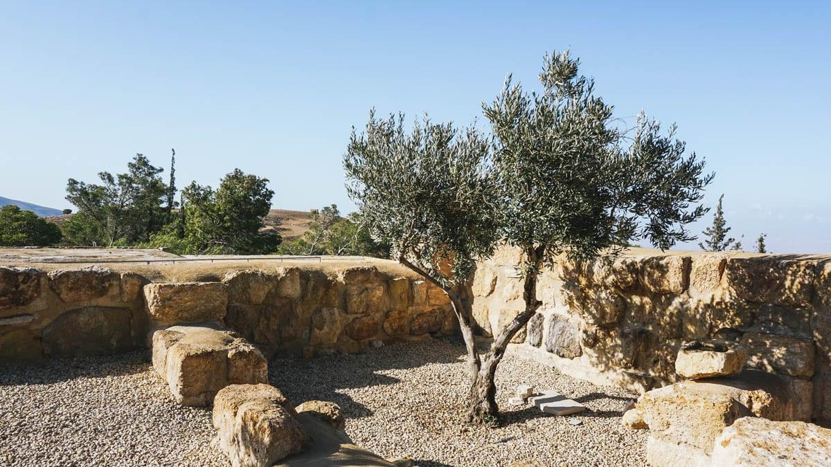 olivier jordanie