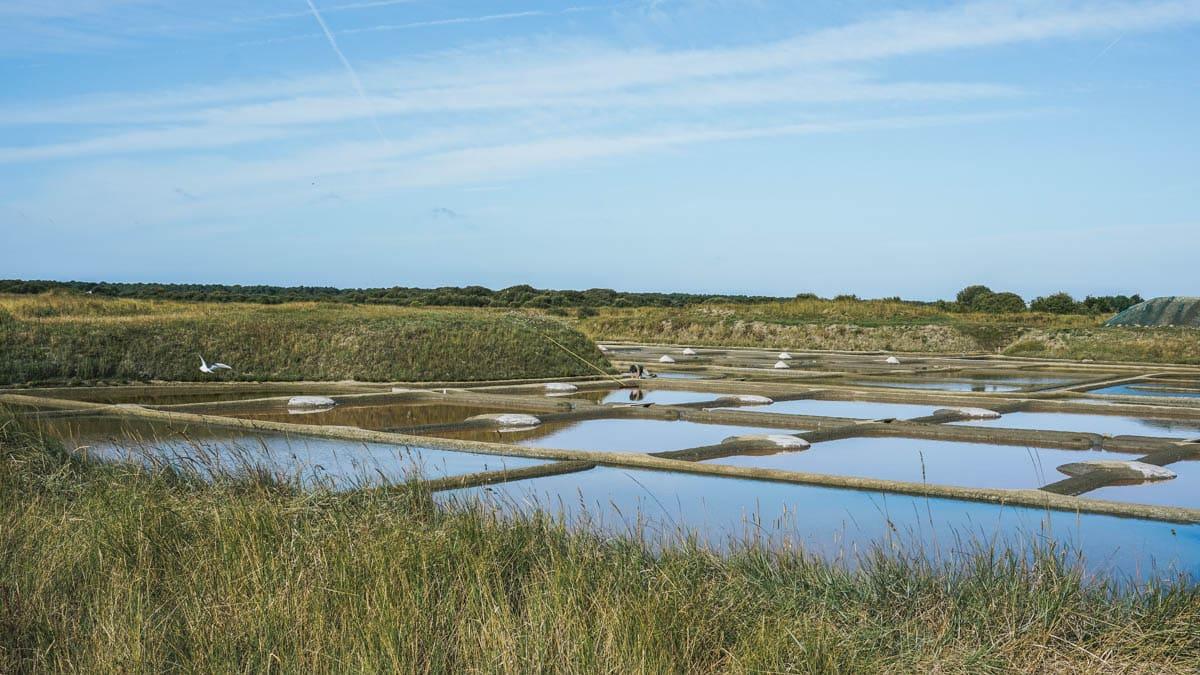 sel marais loire atlantique