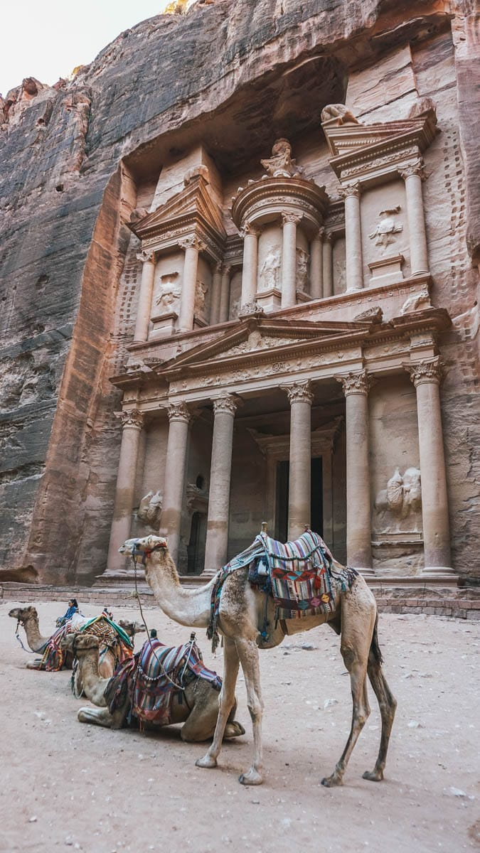 chameau pétra jordanie