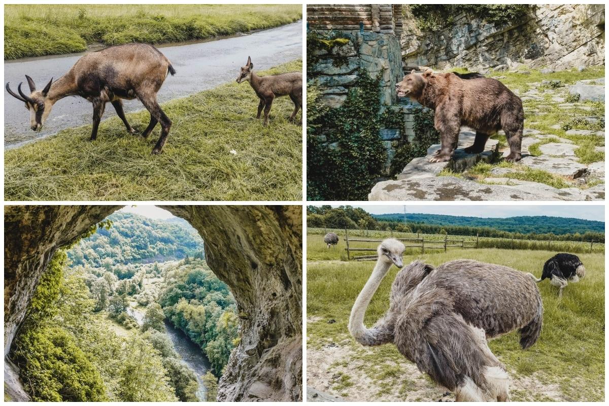 ours autruche grotte belgique