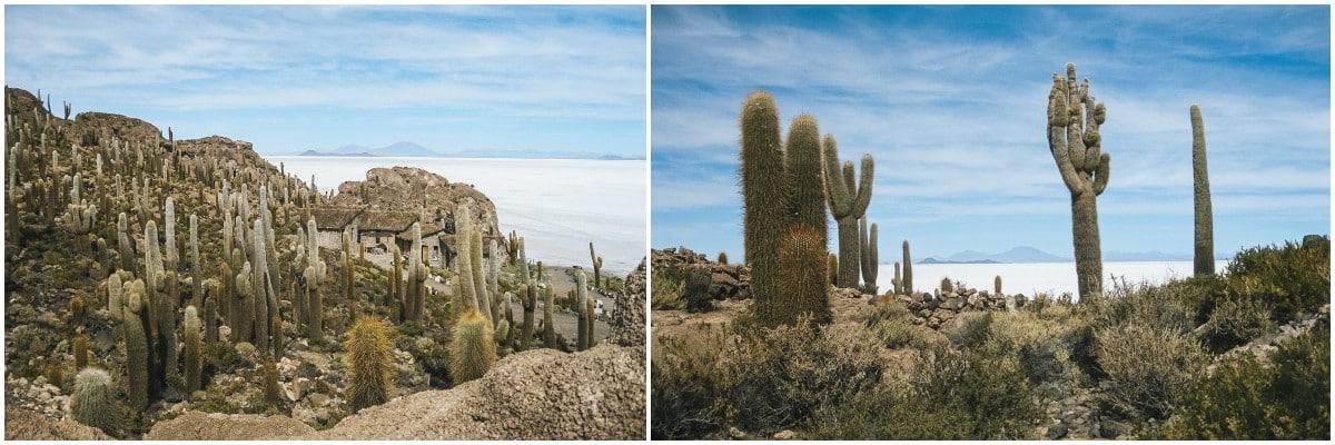 cactus salar bolivie