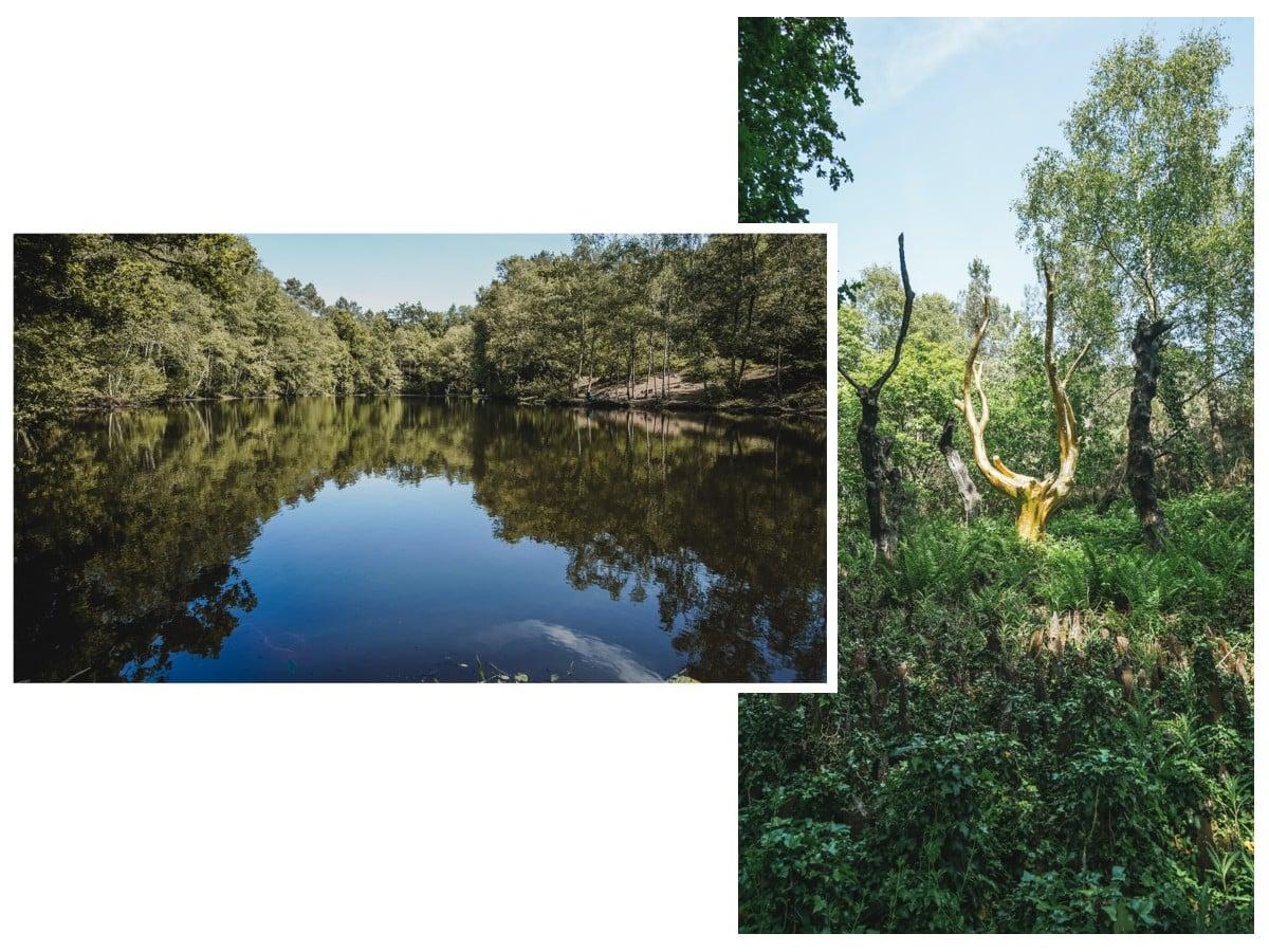 étang arbre or brocéliande