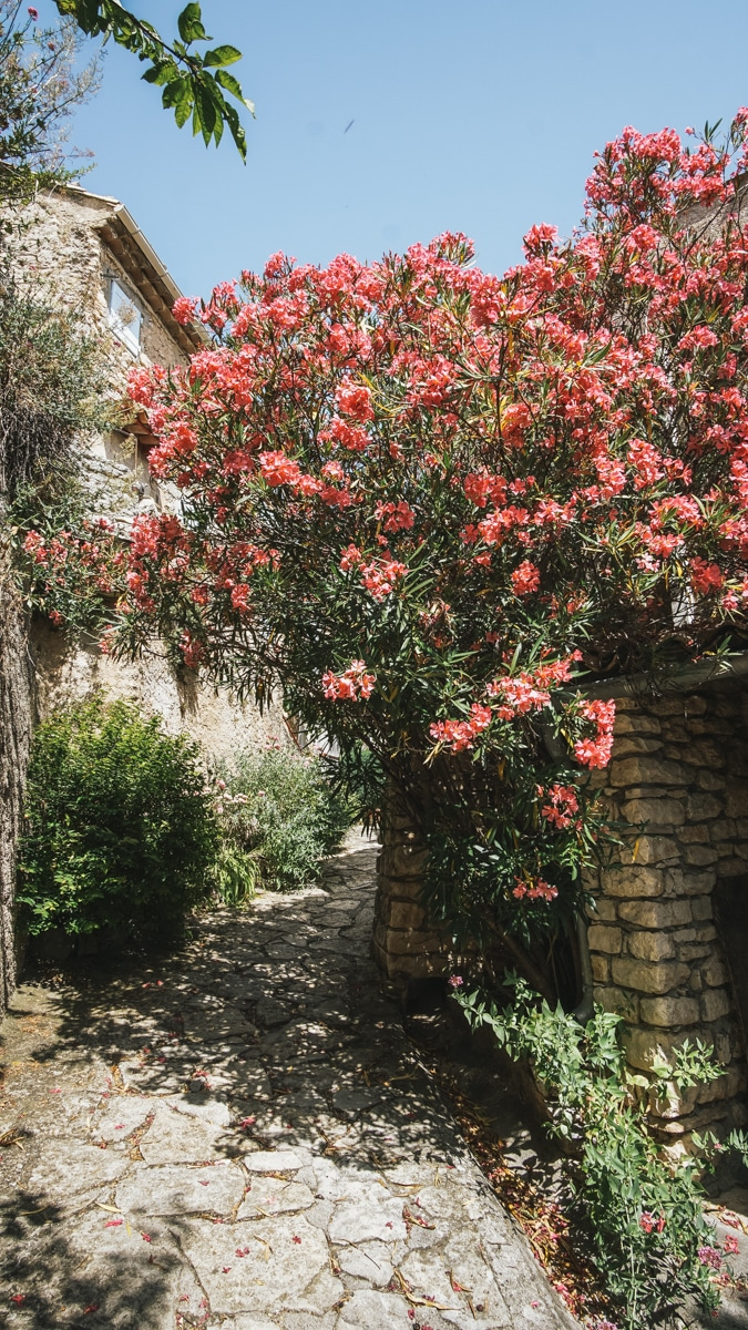 fleur ruelle vaucluse
