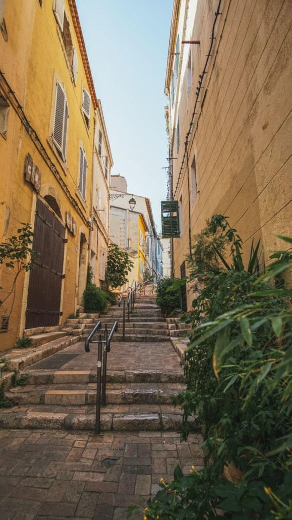 rue plantes