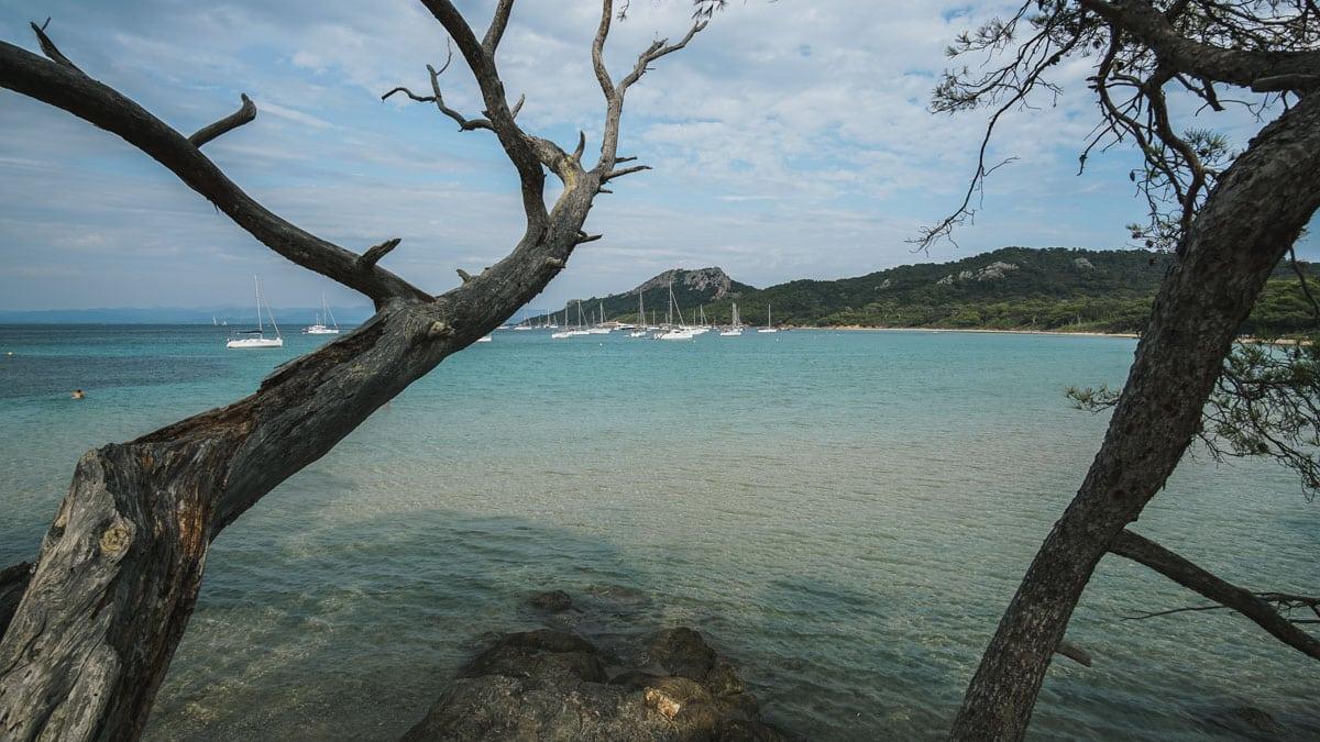 plage mer arbres