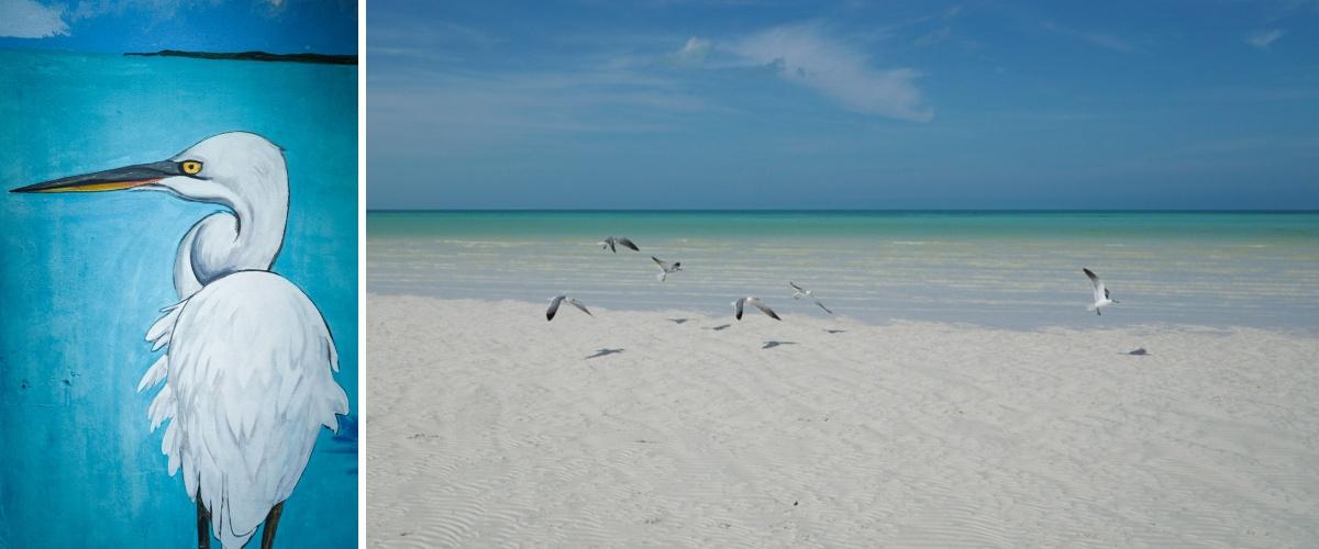 oiseaux plage mer