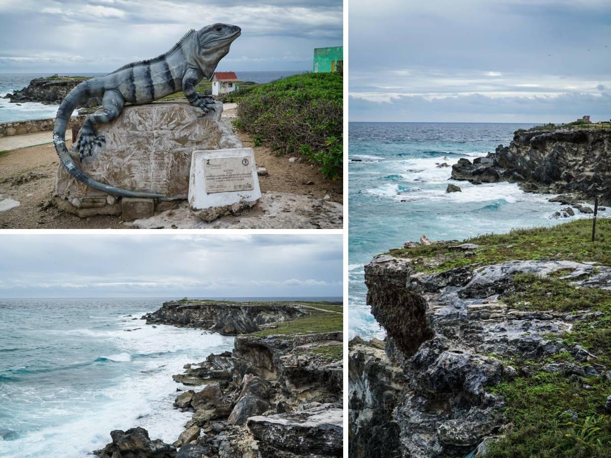 iguane mer
