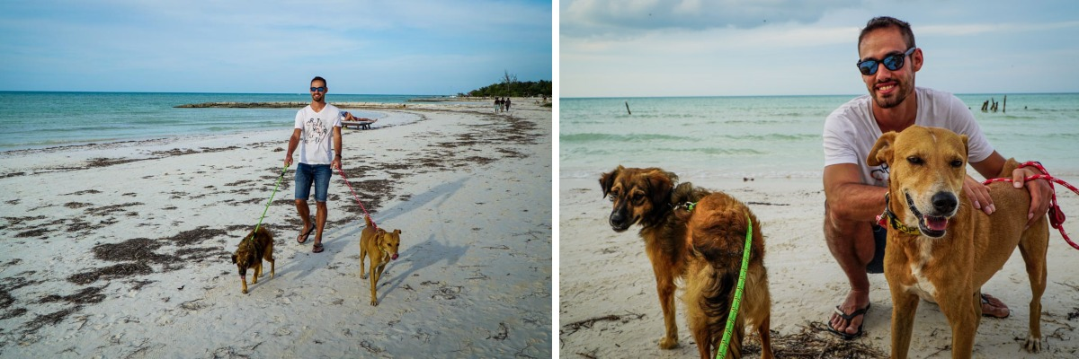 chiens andy plage holbox