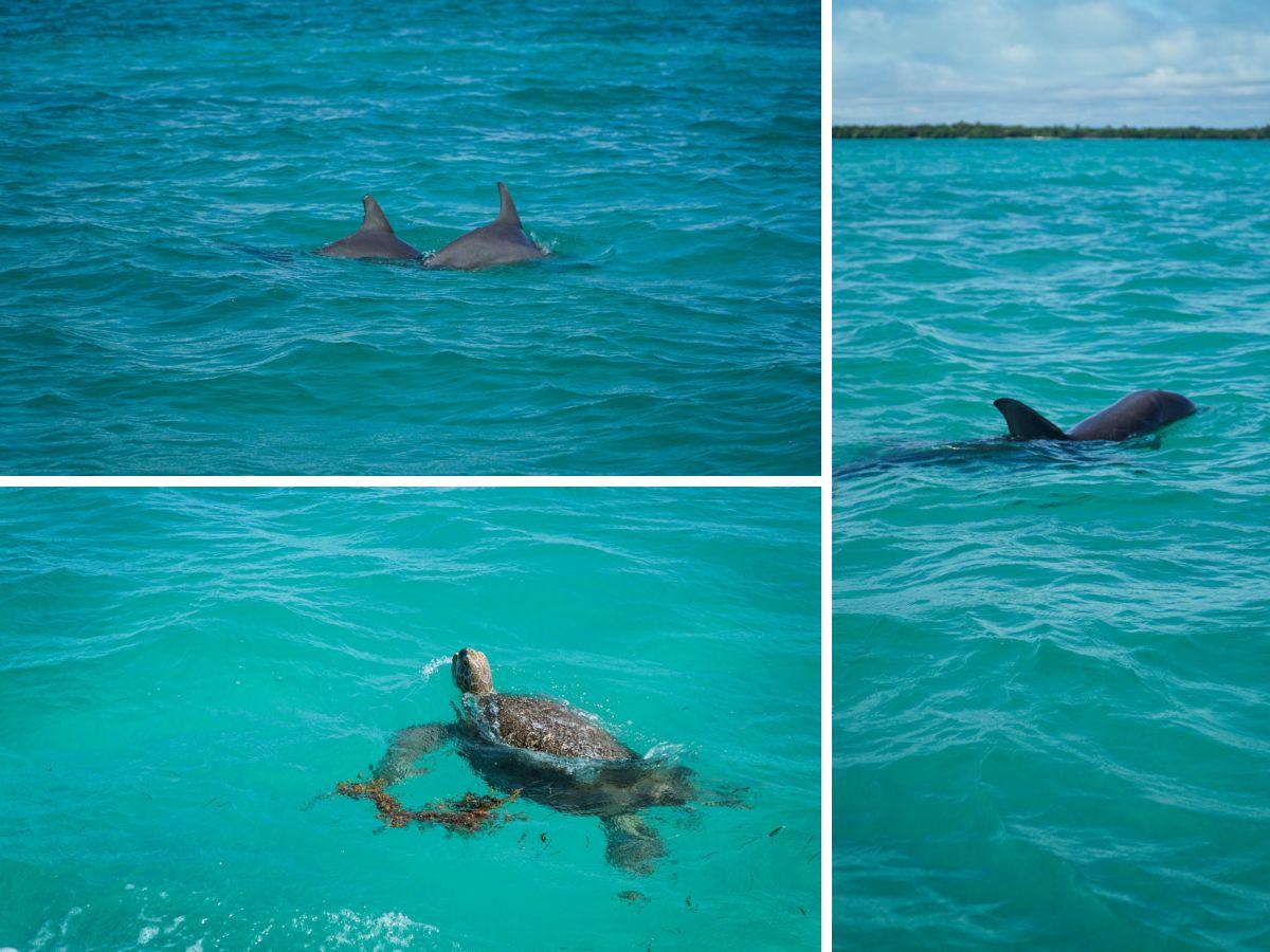 tulum mer dauphins tortue