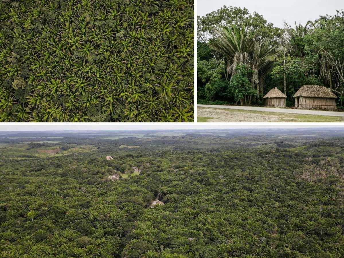 jungle arbres