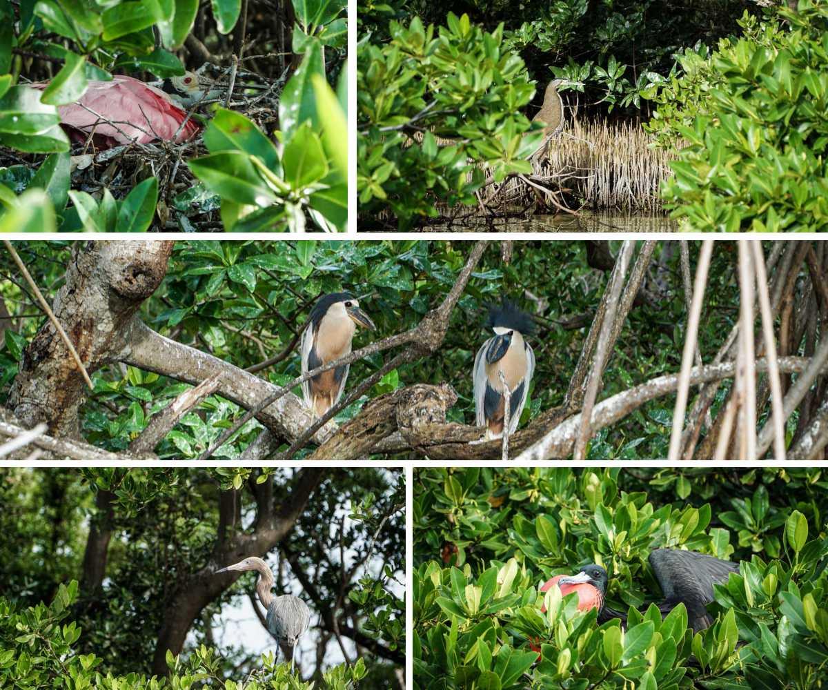 tulum oiseaux arbres