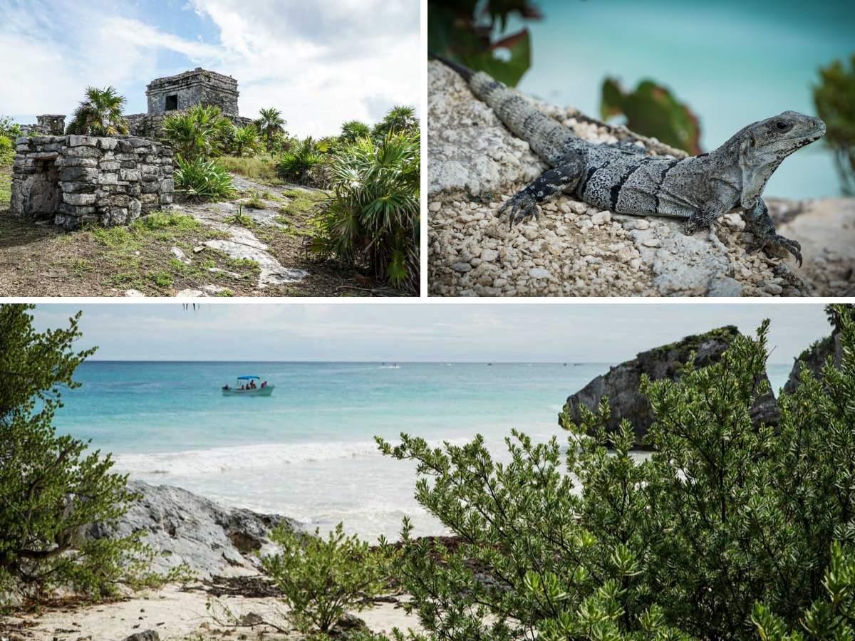 iguane mer ruines